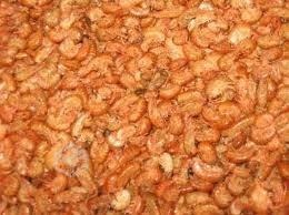 pulga-de-mar-alimento-para-tortugas-de-agua-1k-envio-gratis-19-000