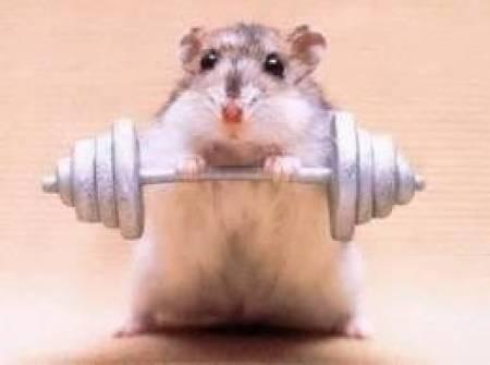 alimento-de-hamster-5-kilos-peletizado-premium-barratisimo-4-600