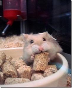 alimento-extruido-para-hamster-barratisimo-5-kilos-4-600