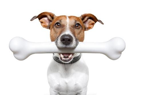 hueso-mascota-gocy-365