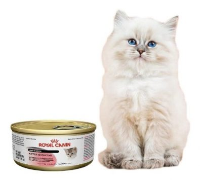 royal-canin-intense-beauty-para-gatos-lata-165g-pethome-1-490