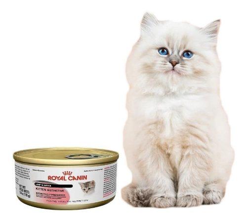 royal-canin-intense-beauty-para-gatos-lata-165g-pethome-1-490