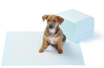 100-sabanillas-panales-33x45cm-mascotas-perro-regalo-8-990
