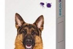 bravecto-20-40-kgs-3-meses-pastilla-pethome-chile-29-900