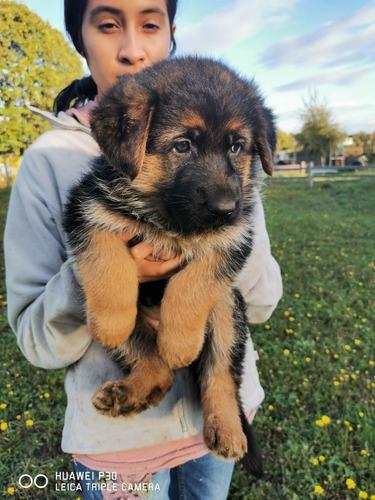 hermosa-cachorra-entrega-20-de-mayo-inscrita-500-000