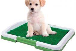 bano-ecologico-sanitario-reutilizable-para-mascotas-5-990